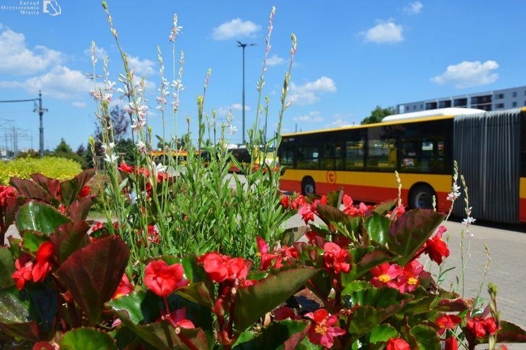 zdjęcie kwiatów na pętli autobusowo-tramwajowej Nowe Bemowo